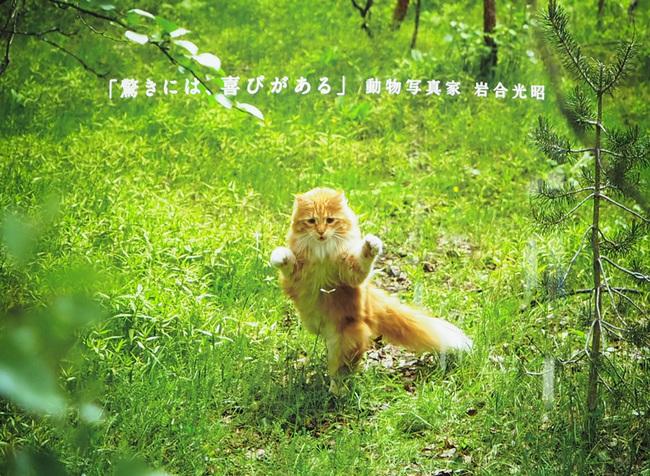 Iwago01.jpg