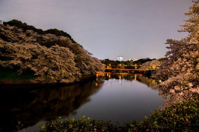 Sakura08.jpg